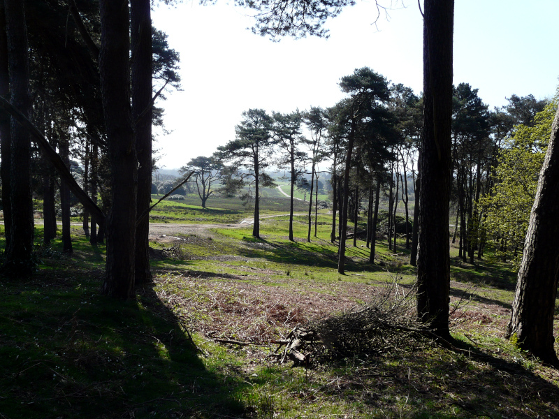 country_park_26