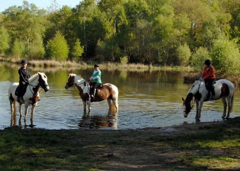 wimbledon_village_stables_3