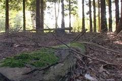 woodland0644i1