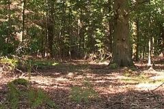 woodland0644i2