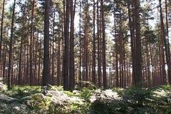 woodland0644i3