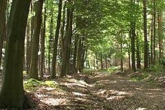 woodland0644i4