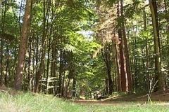 woodland0644i5