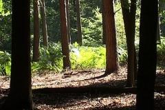 woodland0644i6