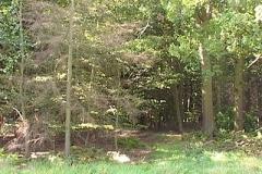 woodland0644i7