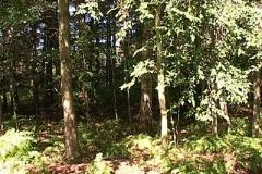 woodland0644i8